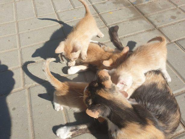Ofer Pisici gratis