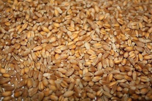 Пшеница, ақ бидай в мешках 97тыс за тонну