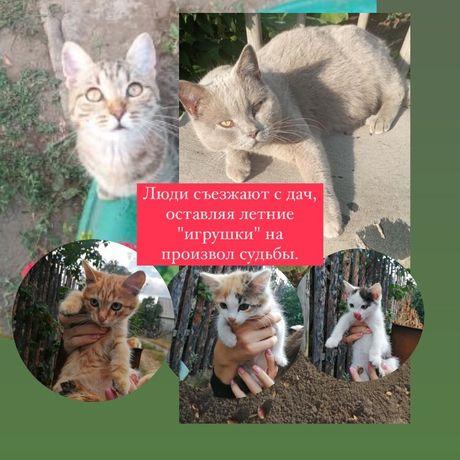 Брошенные кошечки ищут дом