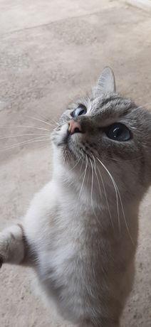 Котёнок в добрые руки, Шымкент очень ласковый, ждёт доброго хозяина