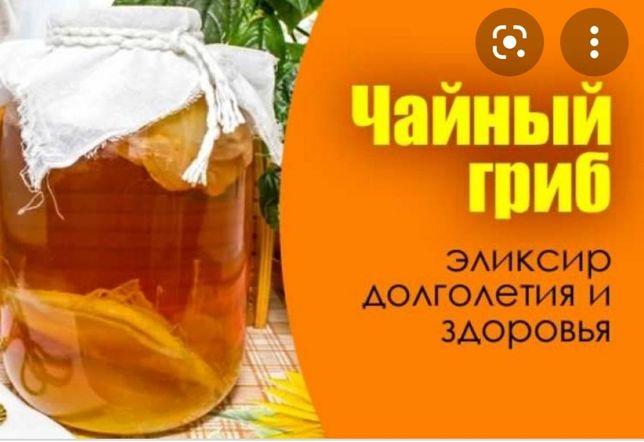 Чайный гриб Кокшетау 500