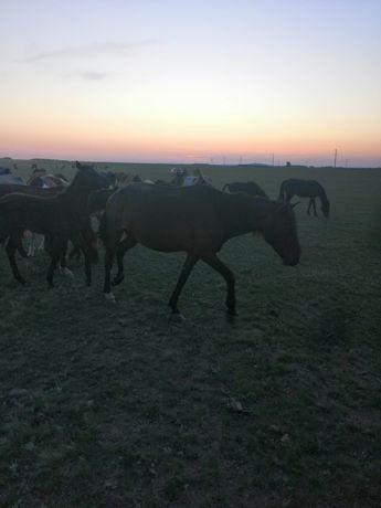 продам лошадей кобыла жеребёнок байтал