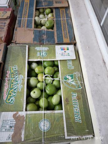 Зеленый помидор в большом количестве
