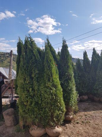 Plante ornamentale pentru gradini de vis