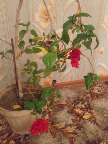 Комнатные цветы разные
