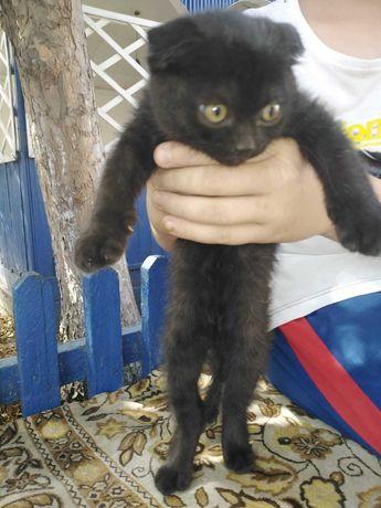 Котенок, самец, 2 месяца