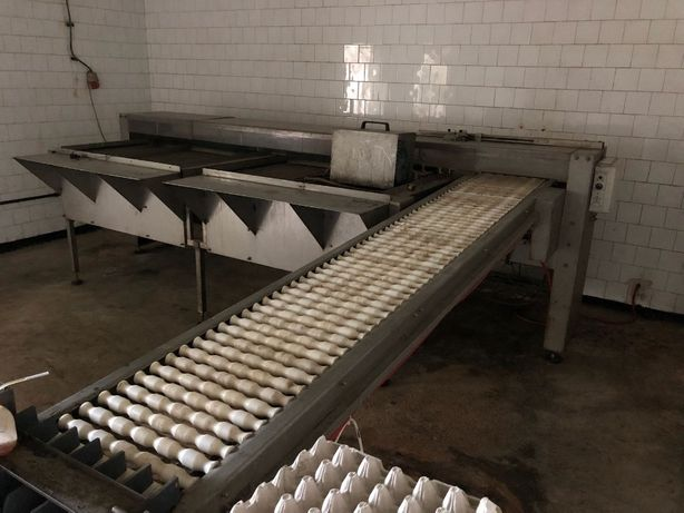 Masina sortat si marcat oua productie OLANDA