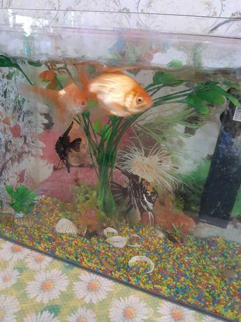 Рыбки в коллекцию  для любителей
