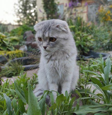 Пропала кошка в Михайловке