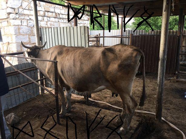 Продам корову дойную