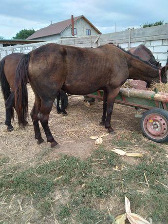 Vand 3 cai curați cuminți fără defecte