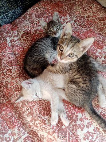 Отдам котят маленькие