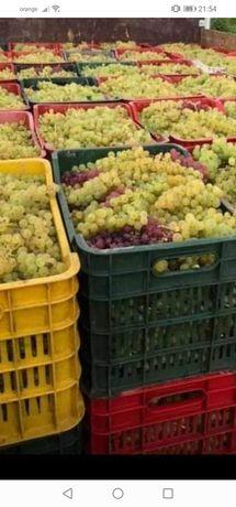 Vând struguri de vin din propria producție. VN