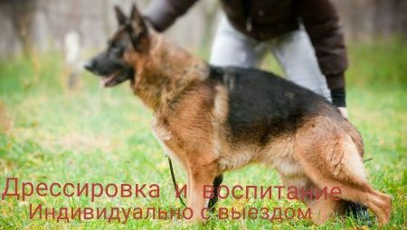 Дрессировка щенков и собак;охрана;с выездом.