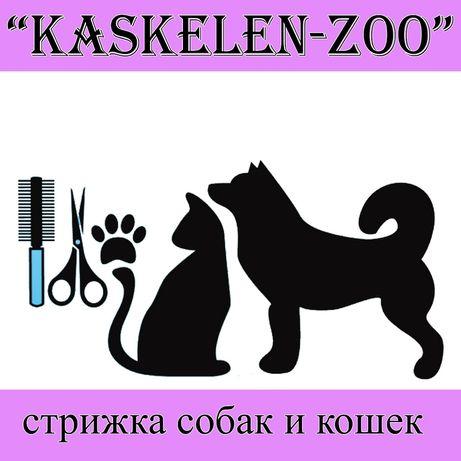 Стрижка собак и кошек в г. Каскелен