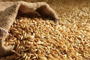 Продавам Пшеница.