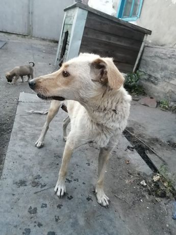 Одам хороших щенят