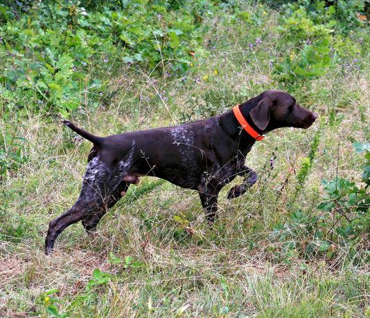 GPS за ловни кучета - тракер / tracker с БЕЗПЛАТНО онлайн проследяване