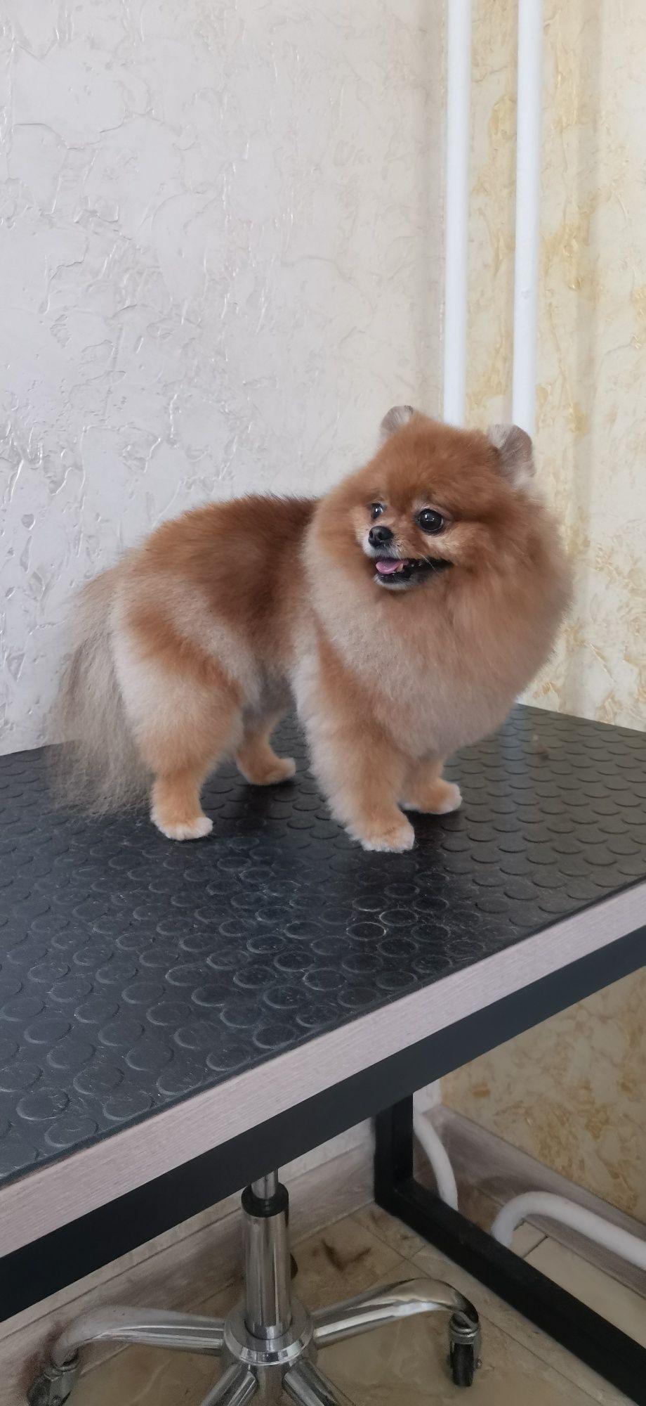 Стрижка и экспресс линька собак