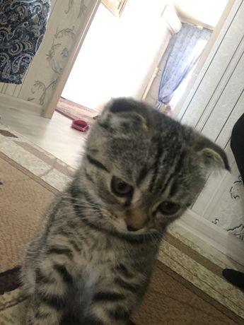 Мальчик-котенок