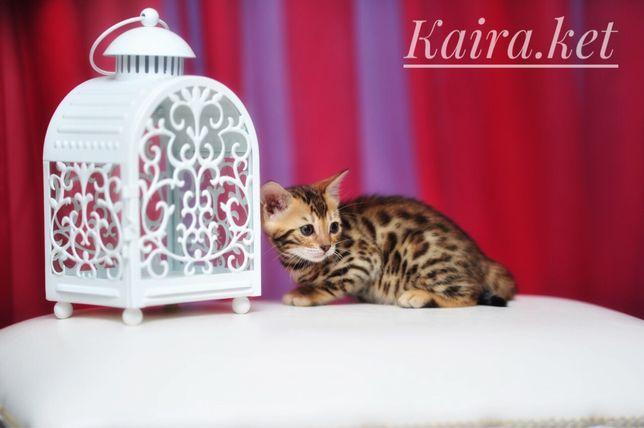 Бенгальские яркие котята!