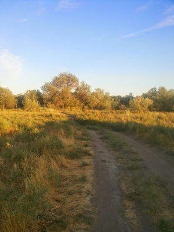 Охотничий дом и земельный участок на Сырдарье
