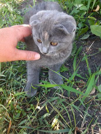 Отдам котят в хорошие руки.