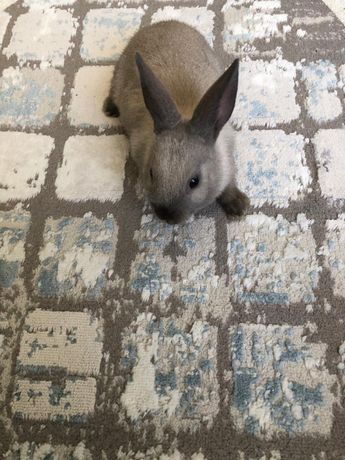 Продам декоративного кролика!!!