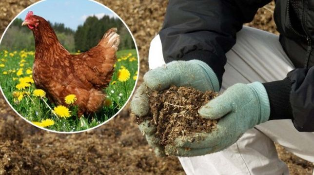 Удобрение для помидоров и огурцов навоз куриный