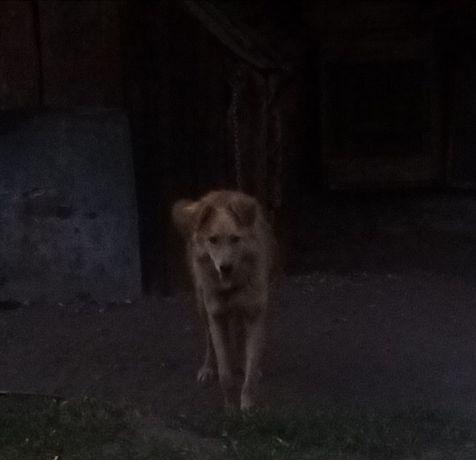 Потерялся пёс вознаграждение тому кто найдёт