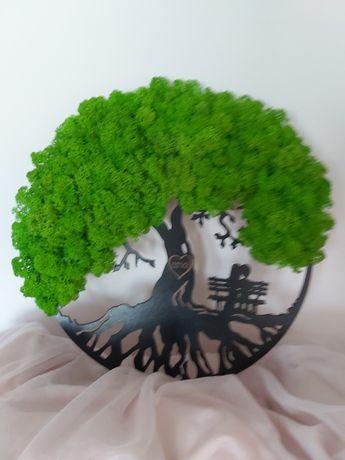 Copaci cu licheni