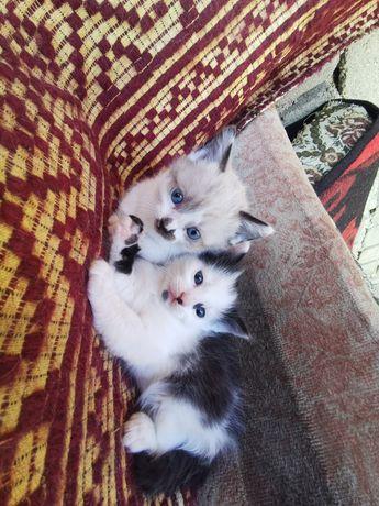 Pisici.. Se donează
