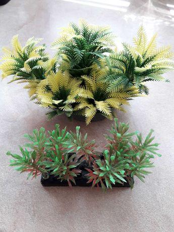 Растения за аквариум с рибки