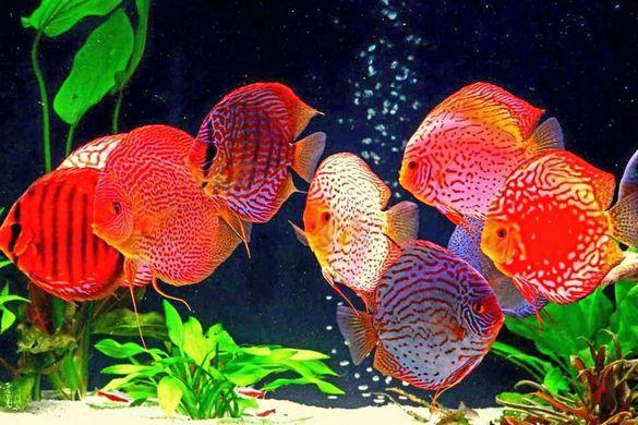 Професионална подръжка на аквариуми