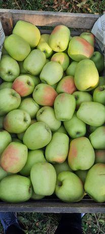Яблоки    Восход