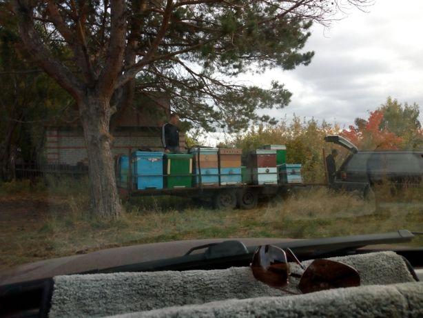 продам прицеп для перевозки пчел пчелоприцеп
