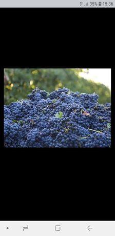 Vând struguri de vin albi și negrii diferite soiuri fetească regală ga