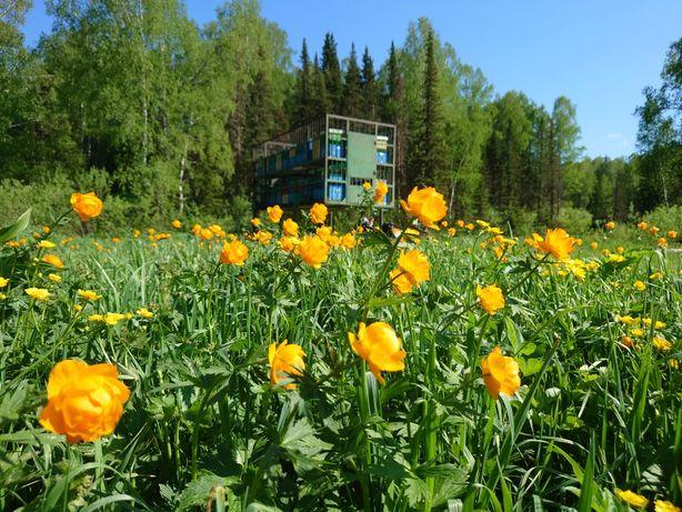 Мёд натуральный от пчеловода