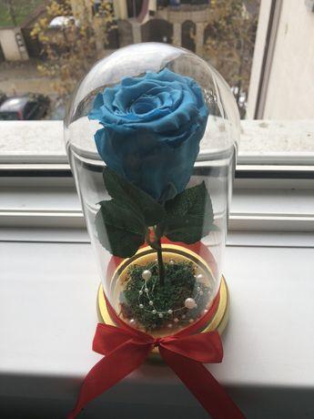 Trandafir criogenat turquoise 120 lei