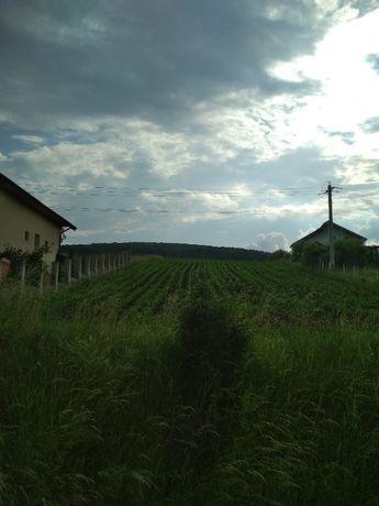 teren de vanzare in Voiniceni