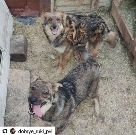Собаки в частный дом для охраны