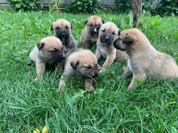 Срочно продам щенят!