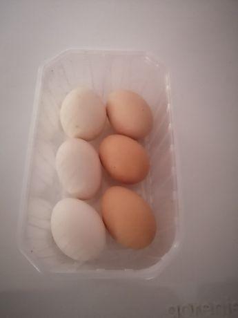 Яйцо инкубационое куриное