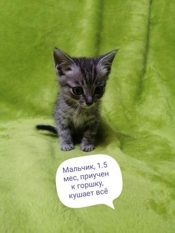 Отдам котенка бесплатно