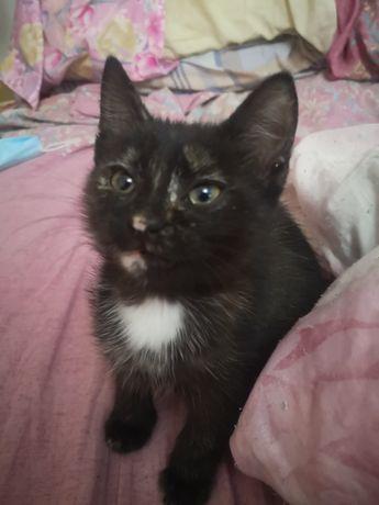 Котенок девочка 1.5 мес