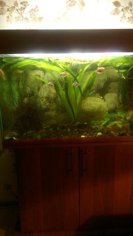 Пиодам аквариум на 130 литров с тумбой ,укомплектован    )