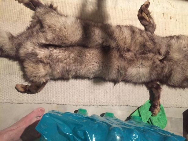 Căciula și guler din blana naturală vulpe
