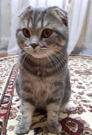 Ищем кошку для вязки