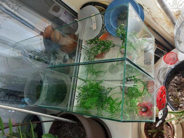 Vand 2 acvarii + ornamente