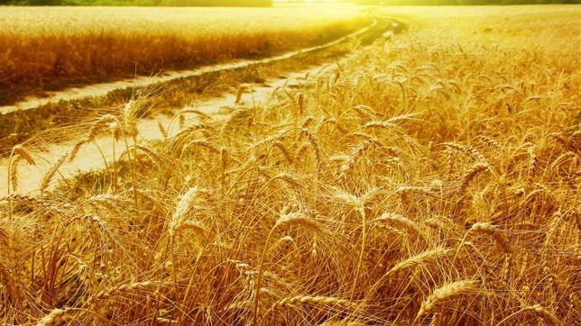 Продаётся сельхоз земля